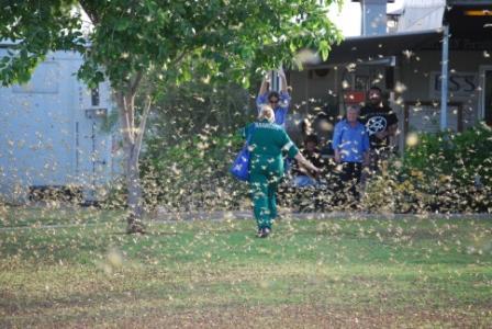 marie grasshopper plague